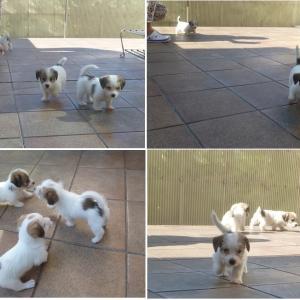 子犬たちのお庭遊び♪