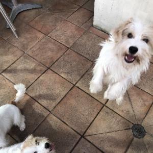 子犬達のママは誰ですか?