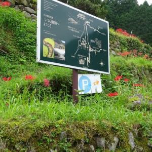 福岡県うきは つづら棚田の彼岸花