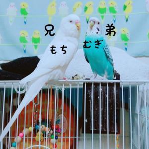 小鳥のビタミン剤【ネクトンS】