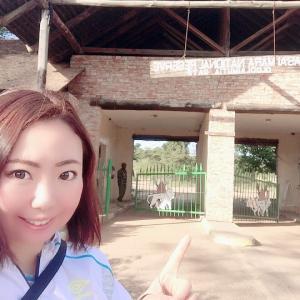 マサイマラ国立公園 2泊3日サファリツアー 1日目 チーターとサンセット