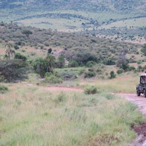 朝から晩までサファリツアー BIG5には会えたのか!? マサイマラ国立公園 ケニア