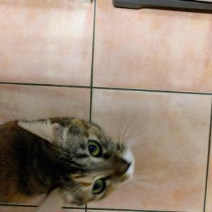 猫だって人間だって小顔に撮る方法は