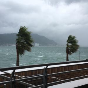 【緊急】朝霧JAMキャンプに台風接近!大雨・強風の対策は大丈夫?