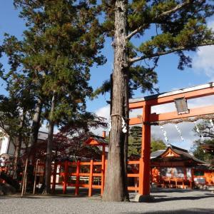 【京都】朱色が映える〈吉田神社〉に参拝してきました