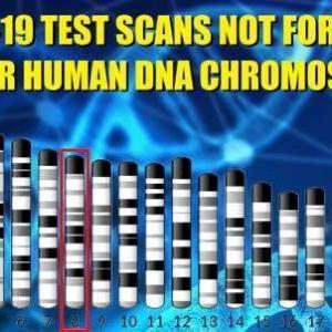 あなたの未来に関する緊急の追加情報!Covidが染色体8の人間のDNAであるという爆弾の証拠–