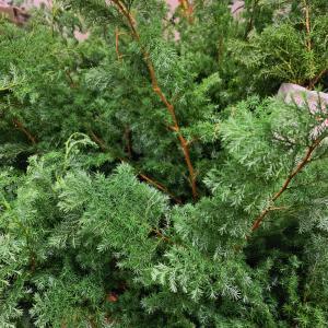 森の香りに包まれる〜クリスマス準備のアトリエ