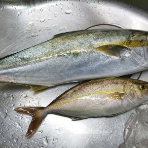 昨日は釣りに行けなかった分、魚津漁港で今日こそ釣るぞ