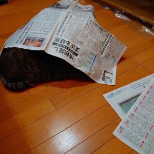 ダミー新聞紙