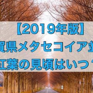【2019年版】メタセコイア並木滋賀の紅葉の見頃は?紅葉状況の確認方法は?