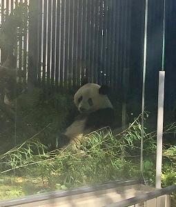 上野動物園レポ パンダの成長