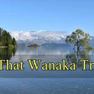 Wanakaの観光名所『ワナカツリー(#That Wanaka Tree)』