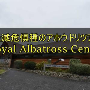 【ダニーデン観光】ロイヤル・アルバトロス・センターで絶滅危惧種アホウドリを見よう