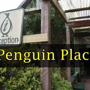 【ダニーデン観光】ペンギン・プレイスでキンメペンギンツアーに参加しよう【ニュージーランド】