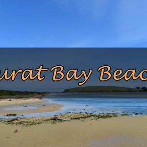【秘境】オットセイが見られるビーチ『Surat Bay Beach』【ニュージーランド】