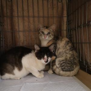 2匹の子猫がやってきた