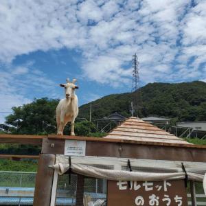 のじま動物園(淡路島)で動物達と触れ合って来ました。