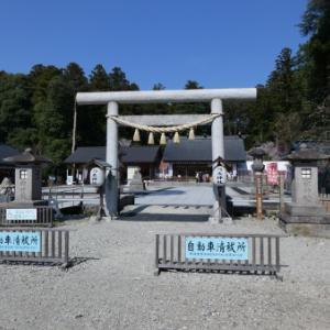 お花見・・・乃木神社