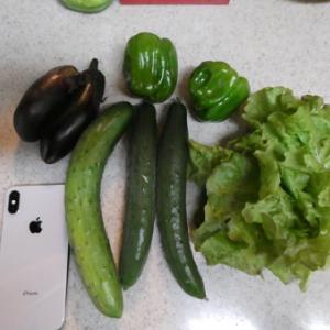 ダイエット日記&本日の収穫