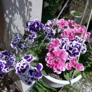 お庭のお花たち