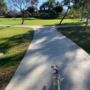 はじめて行った公園で満喫!