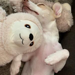 お昼寝のお供!