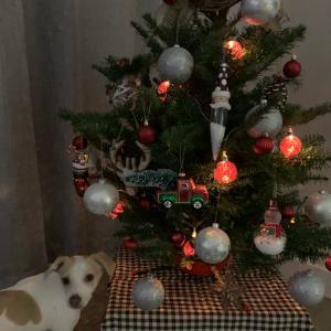 クリスマスツリーが完成しました♪