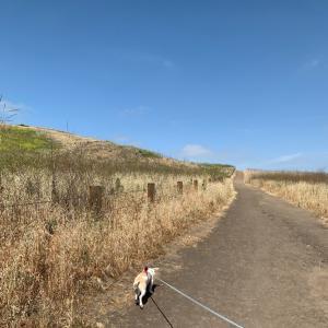 ワンコOKのトレイルでハイキング!