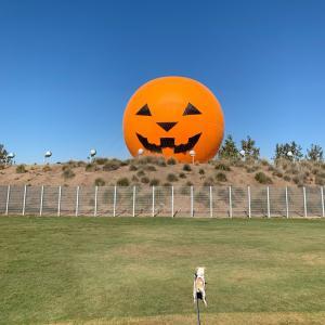 ハロウィン気球!