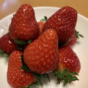 美味しい苺