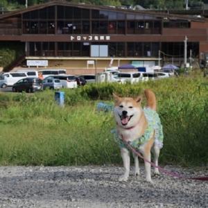 柴犬マイア  トロッコ亀岡駅に行ってきた