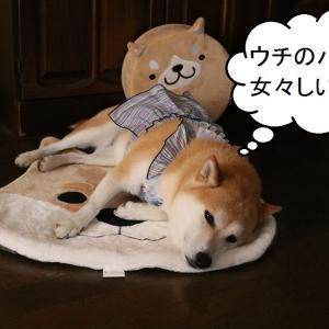 柴犬マイア  憎っき!マイアのYahooブログ