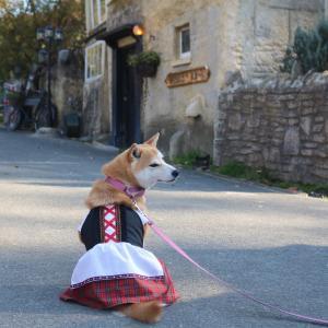 柴犬マイア   ドゥリムトン村に行ってきた