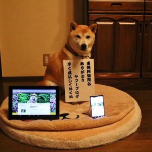 柴犬マイア  南無阿弥陀仏 マイアのYahooブログ