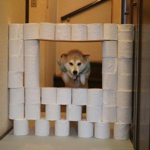 柴犬マイア  芸(トイレットペーパーチャレンジ)の動画