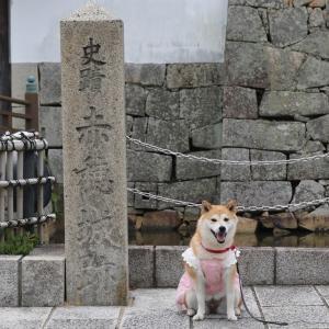 柴犬マイア  赤穂城跡に行ってきた