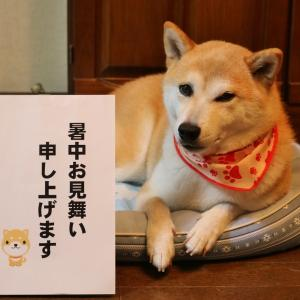 柴犬マイア  拙ブログの7月の総括