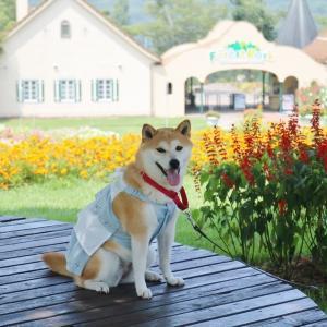 柴犬マイア  おかやまフォレストパーク ドイツの森に行ってきた