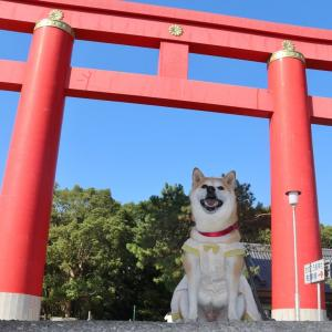 柴犬マイア  おのころ島神社に行ってきた