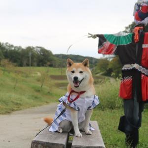 柴犬マイア  あいな里山公園に行ってきた