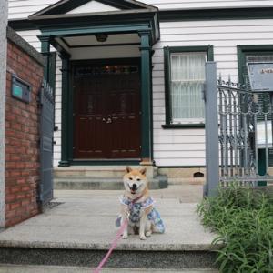 柴犬マイア  神戸市 犬連れで行ける観光地