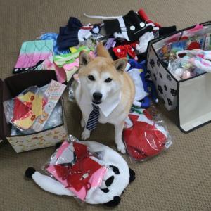 柴犬マイア マイアのコスプレグッズ