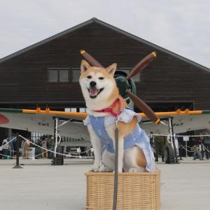 柴犬マイア 再び 鶉野飛行場跡に行ってきた