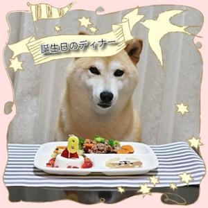 柴犬マイア 8th 誕生日ディナーを食べました