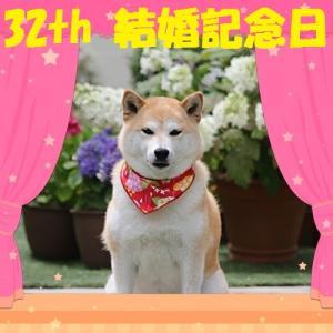 柴犬マイア 32回目の結婚記念日