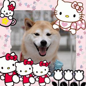 柴犬マイア キティちゃんに会って来た