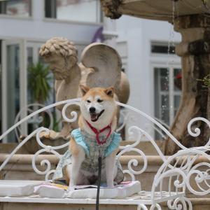 柴犬マイア CRAFT CIRCUS(クラフトサーカス)に行ってきた