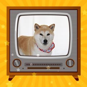 柴犬マイア 「Wii」復活!!