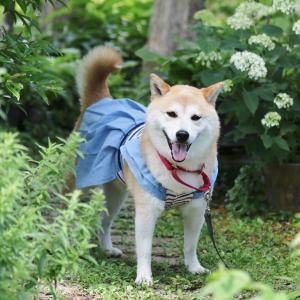 柴犬マイア 「自然を感じる風景になる庭」に行ってきた