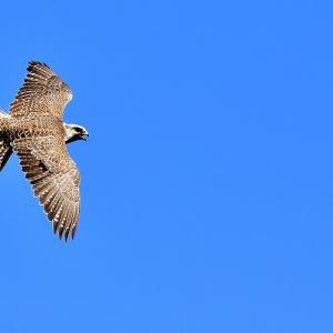 Bird's-eye view 鳥の眼で見る